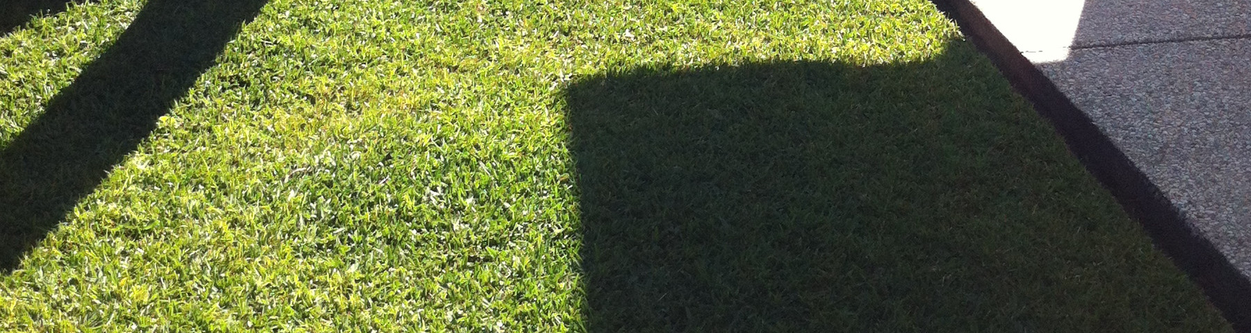 Turfs & Grass Seed